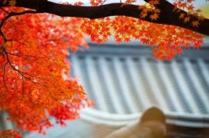 Toit-jap.temple.2